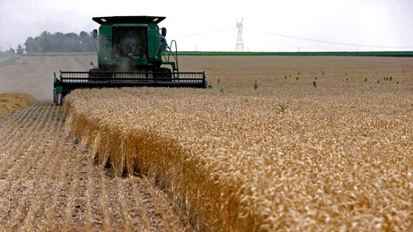 Soft wheat and oilseeds production down this year in Europe