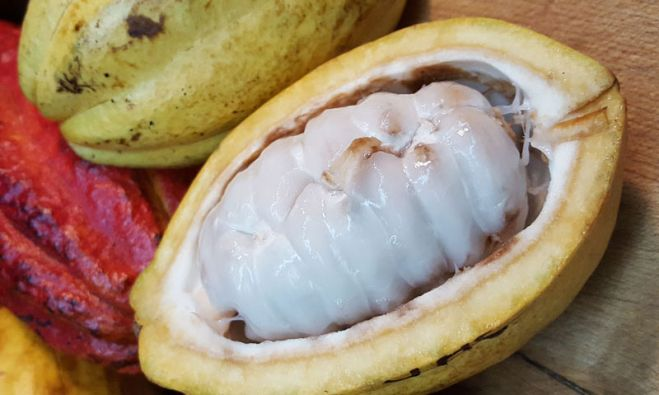 Regulation EU 2020/206 authorising the placing on the market of cocoa fruit as a traditional food