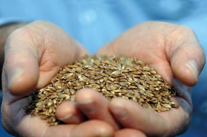 High-amylose wheat foods: a new opportunity to meet dietary fiber targets for health.