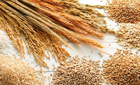 Cereals and oilseeds production decreases in EU